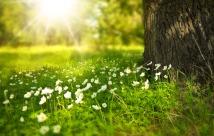 spring-276014