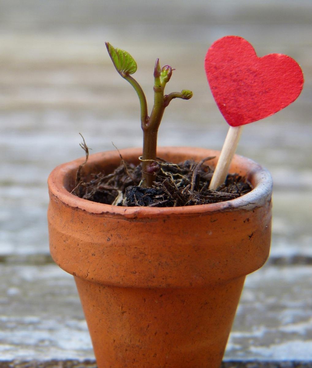 Amour de nature